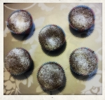 NutellaChocolateCupcakes[1]